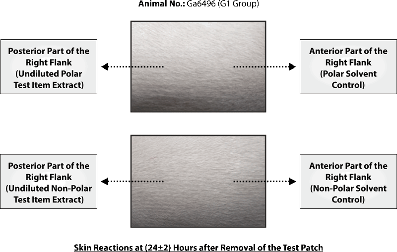 SKIN SENSITIZATION STUDY OF SILKY CUP