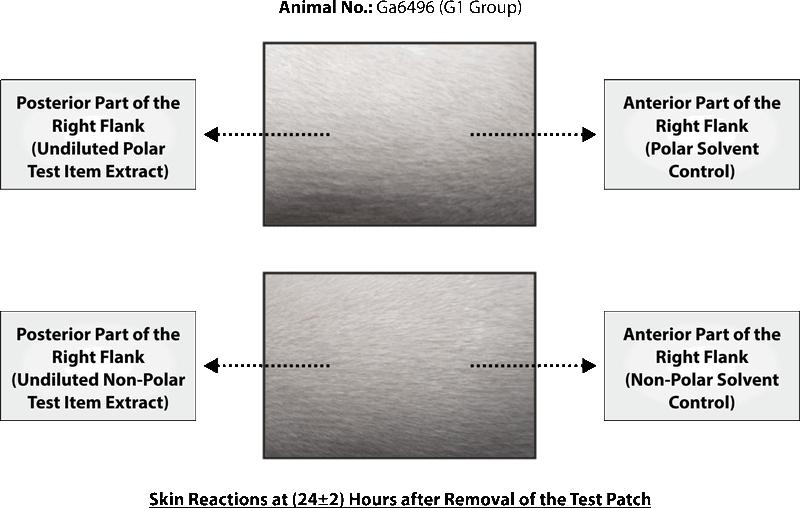 SKIN SENSITIZATION STUDY OF SILKY CUP